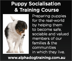 FREE... Puppy Socialisation & Training Course